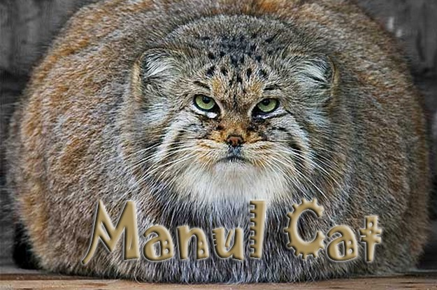 10 Interesting Facts About the Manul Cat